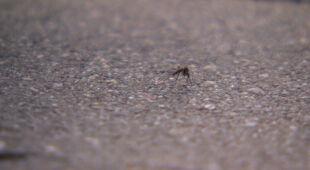 """Jedni stawiają na opryski, inni na naturę. Jak miasta walczą z """"inwazją komarów""""?"""