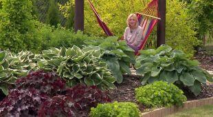 Ogród w słońcu i deszczu (odc. 505)