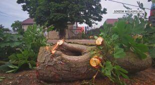 Wiatr łamał drzewa i niszczył linie energetyczne